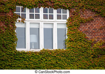 Vertical green ivy brick wall with window