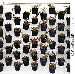 vertical green plant pattern in many black pot