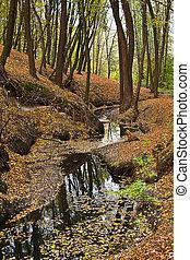 autumn park with a creek