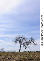 Vertical nature landscape with couple of trees on meadow