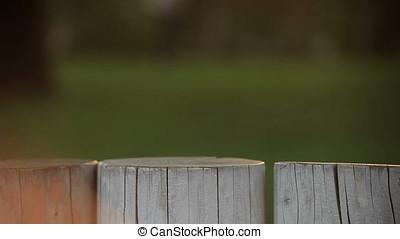 Vertical Pan Shot from Playground to Sun Glares