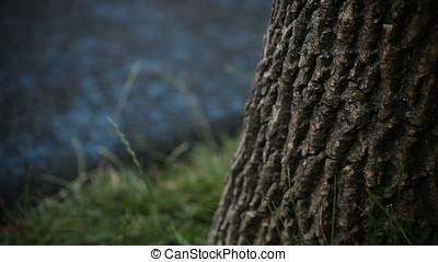 Vertical Pan Shot of Bark Tree Blurry Background Kids Playground