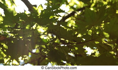 Vertical panorama of leaves and sunlight. Beauty in nature