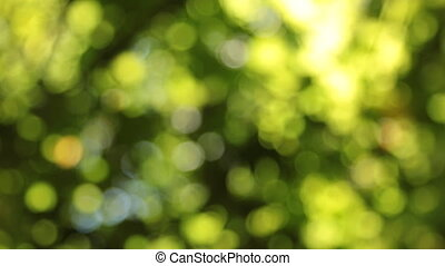 Vertical panorama of leaves and sunlight in blur.