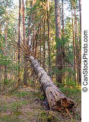 vertical, photo, -, arbre, pourri, forêt, baissé