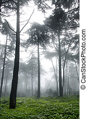 vertical, photo, arbres, brouillard, forêt, pin