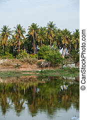 dirtry riverside indian landcape with palms relected in water