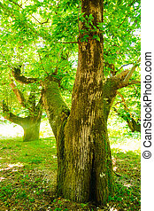 Vertical photo of old tree in a green forest