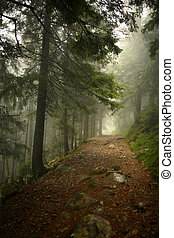 vertical photo of pine trees in a forest with fog....