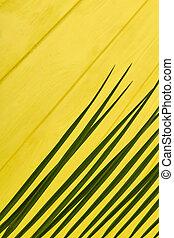 Vertical shot long straight leaves.