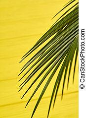 Vertical shot palm branch.