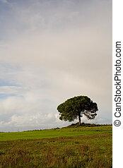 vertical, solitaire, arbre