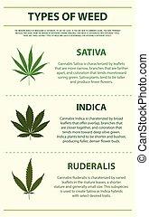 vertical, tipos, erva daninha, infographic
