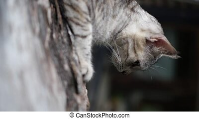 Vertical video of cat lying on the wood - Vertical video of...
