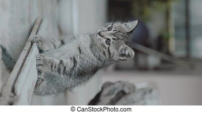 Vertical video with adorable little kitten - Small adorable...