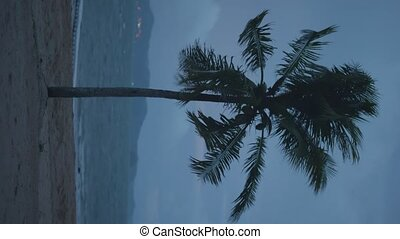 Vertical view of palm tree in the wind with dark cloudy sky and sea background