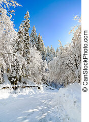 Vertical view of the road to Fusine Lakes in the Mangart...