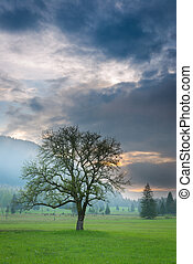 vertical, vista, de, solo, árbol, en, brumoso, ocaso