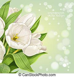 verticale, primavera, fondo, con, bianco, tulips