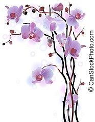 vertikal, bakgrund, med, violett, orkidéer