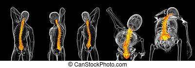 vertolking, 3d, vertebrae