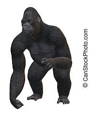 vertolking, witte , 3d, gorilla