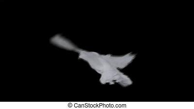 vertragen, vliegen, vrede, motie, achtergrond, wit dove, transparant
