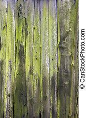 veru, porte, vertical, fermier, moussu, planches, côté, vert, vieux, ou, grange