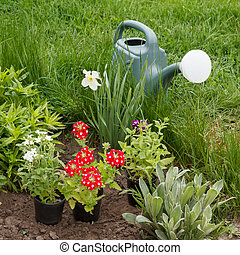 Vervain flowers and watering can in a garden bed.