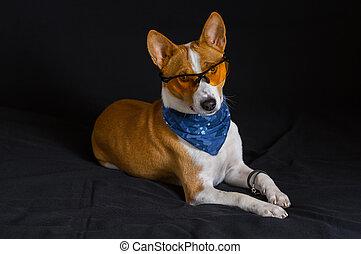 vervelend, kerchief, blauwe hond, gele, basenji, zwarte...