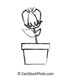 verwischt, silhouette, tulpenblüte, blume, in, topf