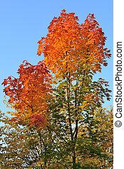 Very beautiful autumnal trees