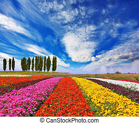 Commercial cultivation of flowers for sale abroad. - Very ...