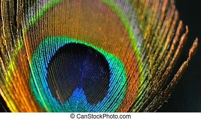 Very beautiful peacock feather. Natural pattern. Macro. 4k....
