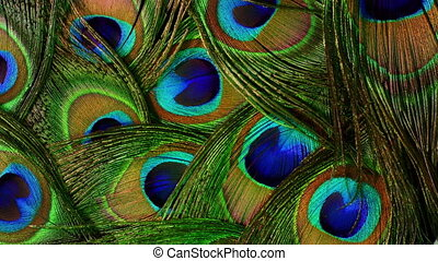 Very beautiful peacock feathers. Natural rotating colorful pattern. Macro close-up view. 4k. Can be used as transitions, added to projects.