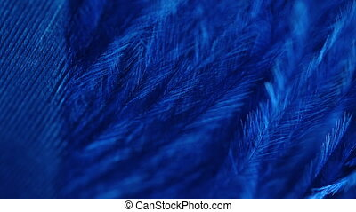 Very beautiful rotating peacock feather. Blue bird natural pattern. Macro view. Texture of feather structure under microscope