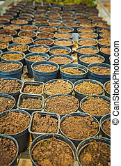 very big set of pots with ground for young seedlings