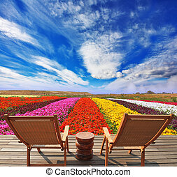 Very bright colorful flower fields