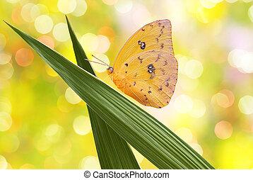 Very bright yellow butterfly macro