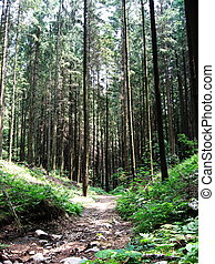 very dense forest with trees