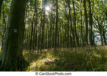 Very dense thick decidiuous forest with tall trees and hiking trail marker in Jasmund National Park in Germany