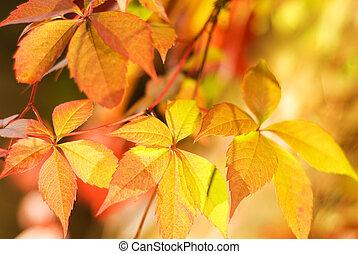 (very, dof, feuilles, peu profond, leaf), foyer, brouillé, automne, fond, résumé, premier
