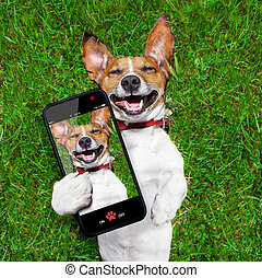super funny face dog lying on back on green grass and laughing out loud taking a selfie