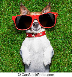 super funny face dog lying on back on green grass looking crazy