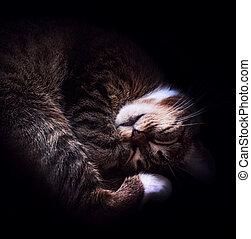 trendy cat photo