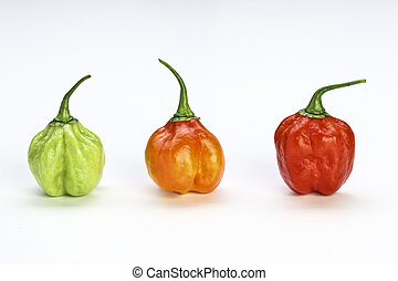 very hot chilly pepper