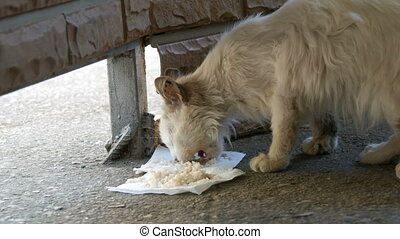 Very hungry dirty homeless white cat eats rice on the floor...