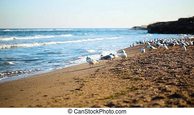 very large flock of seagulls on the beach