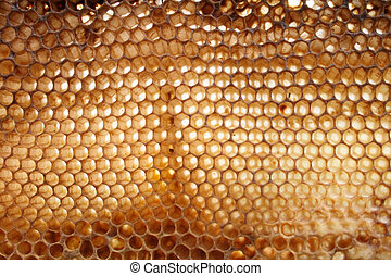 very nice natural background from the empty honey texture