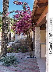 Very Nice Tree with Pink Flowers near a Stone Structure